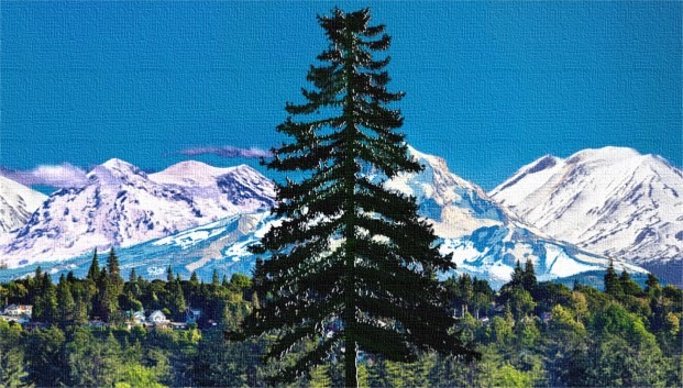 douglas fir tree cascadia, cascadia doug flag nature