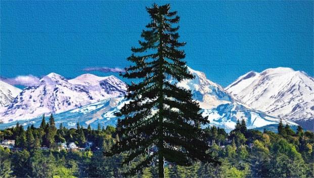 douglas fir tree cascadia, cascadia doug flag nature